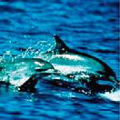 dolphin2[1]