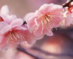 ★ 4月7日新月の無料遠隔ヒーリングを実施します。