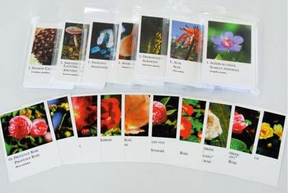 コルテPHI写真カード